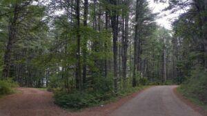Path Crossroads