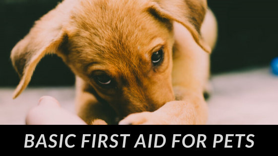 Pet First Aid - Wilde Escape