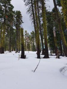 Sierra Buttes snow