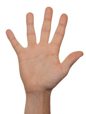 Hand with five fingers