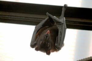 bat-hanging-upside-down