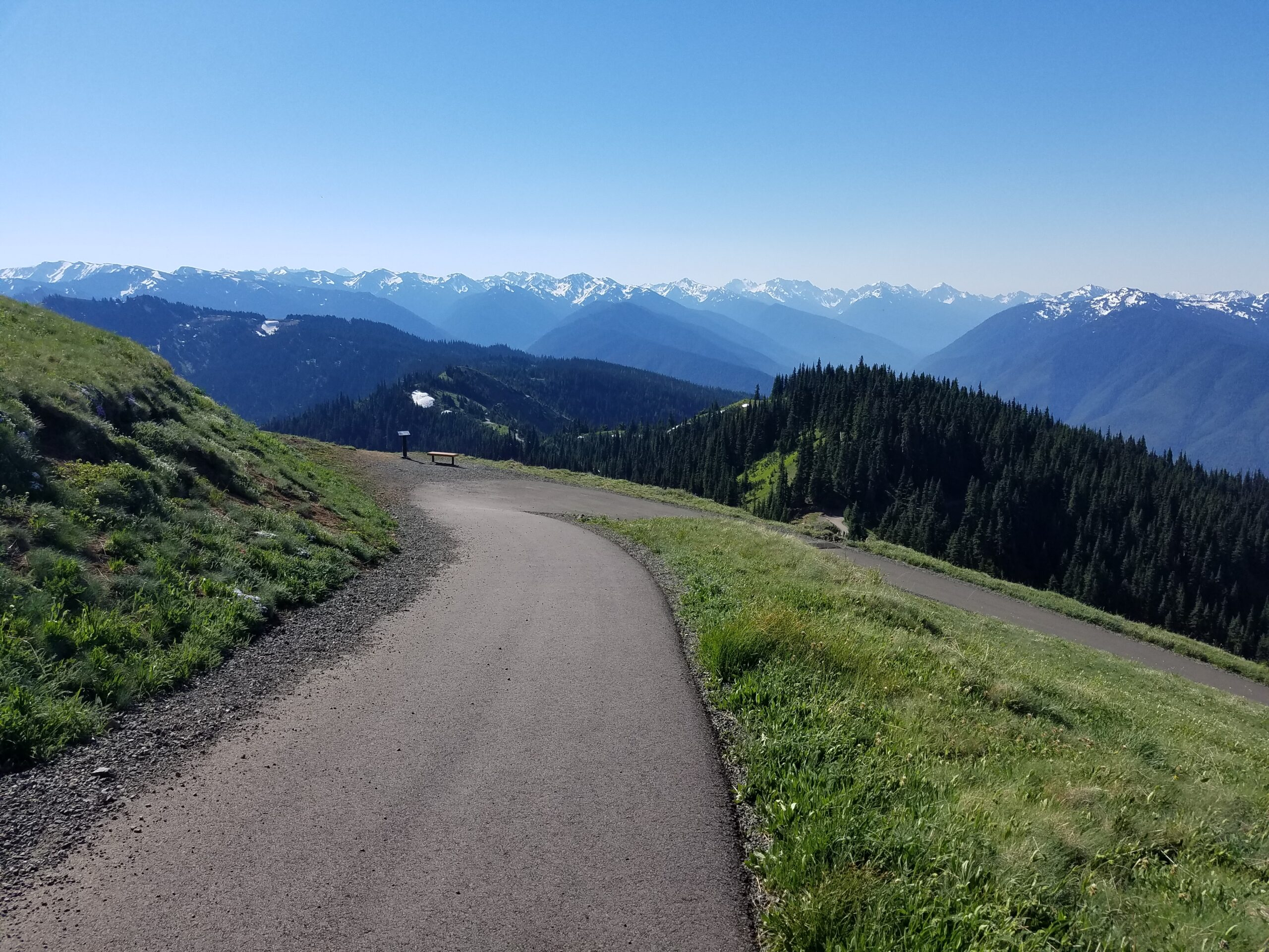 path-at-olympic-national-park